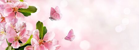 Blossoming pink apple against pink bokeh background and butterflies on nature. Spring banner, border with copy space.
