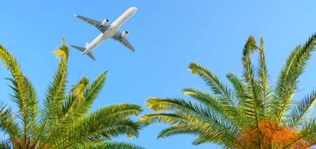 Airplane flying over tropical palm trees on blue sky background 版權商用圖片