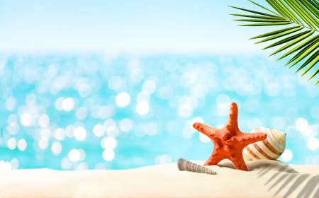 Summer tropical holiday vacation background. Palm leaves, seashells on the beach sand and defocused sea water surface glittering on the sun. Copy space