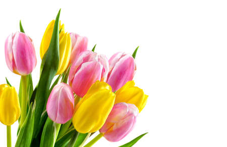 Bouquet of pink and yellow tulip flowers isolated on white