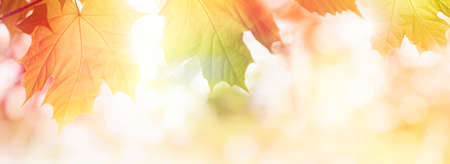 Colorful Autumn leaves on sunlight web banner or background