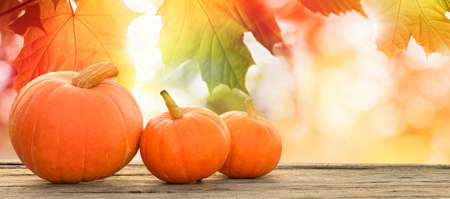 Thanksgiving pumpkins on autumn leaves background