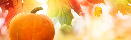 Thanksgiving pumpkin on the background of falling gold red autumn leaves. Copy space.