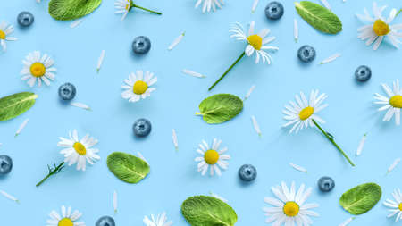 Daisy or camomile flowers with blueberry and mint leaves on blue background. Soft spring pattern