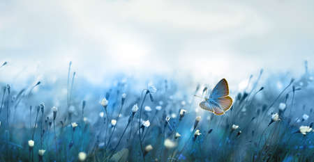 Mysterious soft blue misty morning in the meadow with flying butterfly 版權商用圖片