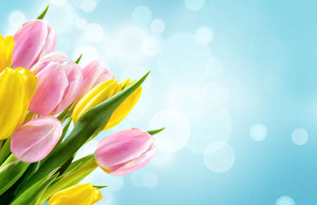 Bunch of yellow and pink tulip flowers on blue blur background