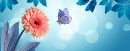 Pink gerbera daisy flower and flying butterfly on spring background