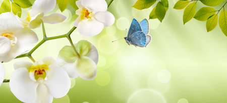 Orchids with a butterfly on nature background