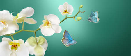 White Orchid stem with a butterfly on blur abstract background 版權商用圖片