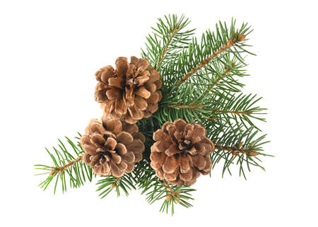 Branch of fir tree and cone isolated on a white background 版權商用圖片