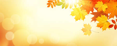 Autumn banner with leaves on sunlight. Vector