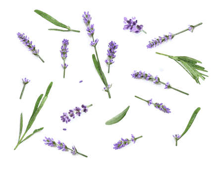 Watercolor Lavender flowers isolated on a white background