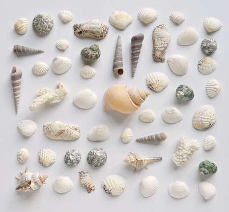 Seashells collection on a white background 版權商用圖片