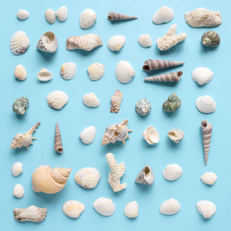 Seashells collection on pastel blue background