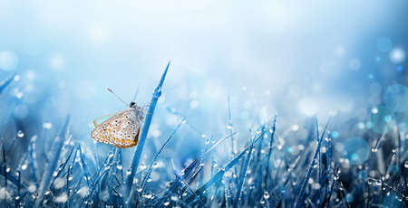 Flying butterflies over summer meadow. Morning grass with dew