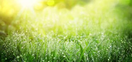Spring green grass nature background. Copy space. 版權商用圖片