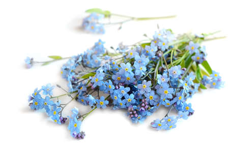 Forget me not flowers bunch on a white background