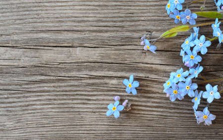 Forget-me-not flowers on an old wooden background top view