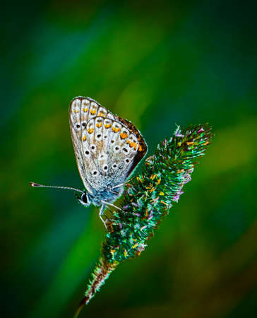 A butterfly on a wild flower. Macro photo of a butterfly in nature
