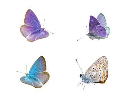 Butterflies set isolated on a white background