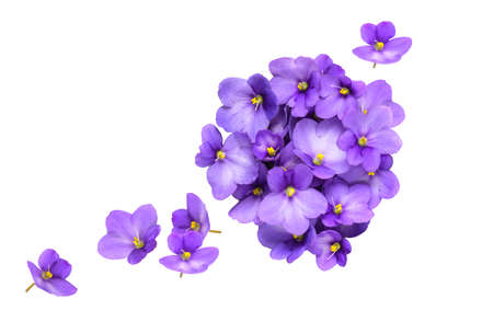 Floral composition of violet flowers isolated on white background. Flat lay, top view, copy space Standard-Bild