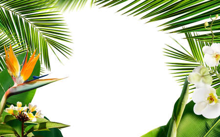 Summer frame with fresh tropical palm leaves plants and flowers isolated on white