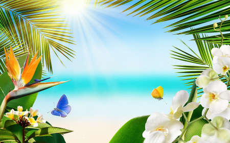 Tropical sandy beach with blurred sea tropical palm leaves, plants, flowers and butterflies