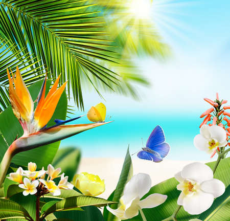 Butterflies flying around tropical flowers and plants on a blurry background of beach and ocean 写真素材