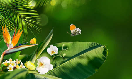 Butterflies flying around tropical flowers and plants on a blurry background