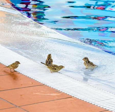 Birds splashing around the empty outdoor pool in deserted hotel 写真素材