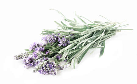 Lavender bunch isolated on a white background 写真素材