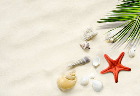 Srarfish, seashells on the sand with palm leaf. Travel vacation summer background