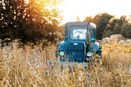Old blue tractor on the tall dry grass field Banco de Imagens