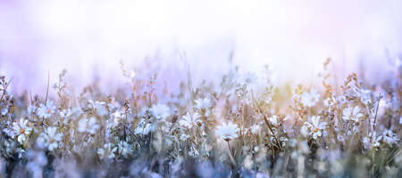Beautiful morning in the meadow soft flowers background