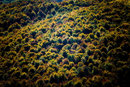 tree position: Abstract autumn tree colors in forest. Colorful autumn forest detail. Taken from aerial position.