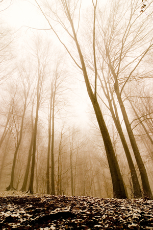 bleak: A forest in the fog, misty atmosphere, warm light. Stock Photo