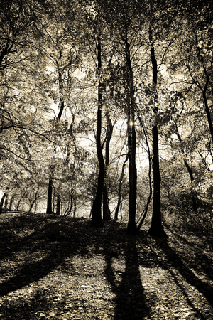 backlights: Low sunlight back-lights this scene that casts tree shadows across a clearing in the forest. Stock Photo
