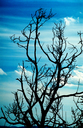 atmospheric: Moody picture of dead tree branches and sky, atmospheric shot scanned from 35mm film. Stock Photo