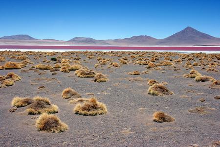 Colourful Laguna Colorada on the Altiplano high plateau, Bolivia Stock Photo