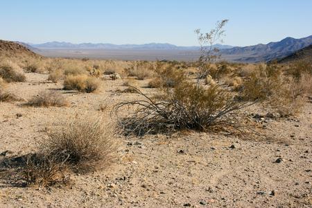 joshua tree national park: Panorama landscape of Joshua Tree National Park, Mojave Desert, California Stock Photo