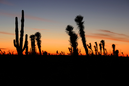 Desert Sunset with Silhouettes of Cactus in the Sonoran Desert, Baja California Norte, Mexico Stock Photo