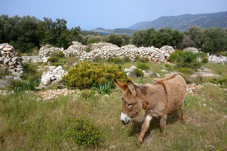 Lycian countryside, Likya Yolu Hiking Trail, Turkey