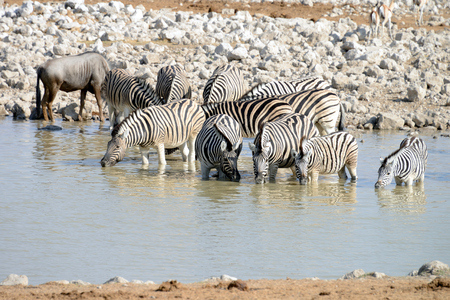 Animals at watering hole, Etosha National Park, Namibia Stock Photo