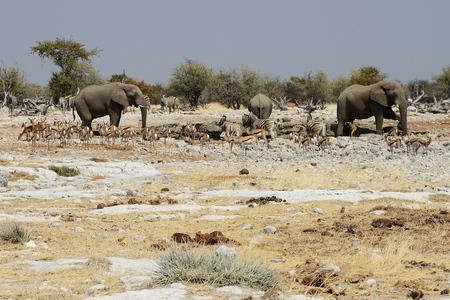 Animals at watering hole, Etosha National Park, Namibia Imagens
