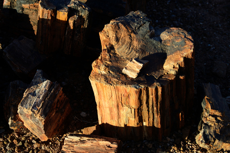 Petrified forest, Damaraland, Namibia Stock Photo