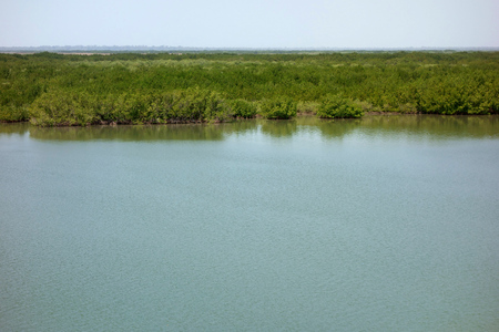 Casamance River, Senegal Stock Photo