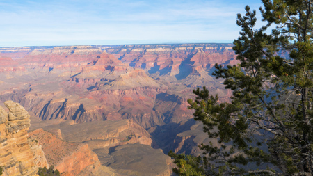 Grand Canyon In Sunny Day On Background Of Pine Tree