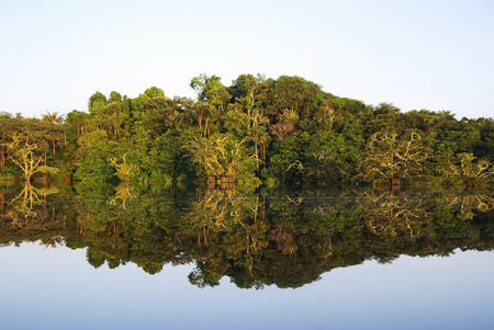 The trees of the djungel reflecting in the lake of cuyabeno parc