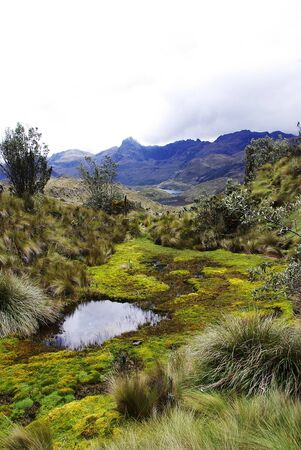 Wild landscape in el cajas national park in the mountains of ecuador Stock fotó