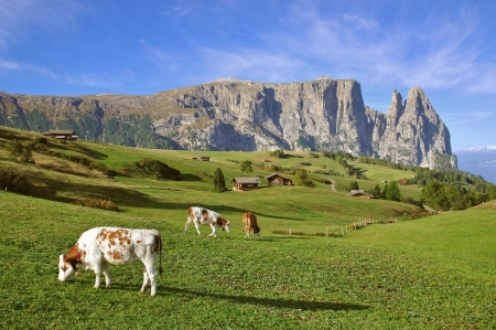 the famous Schlern Mountain on Seiser Alm,South Tyrol,Italy